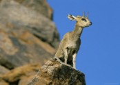 Klipspringer Hiking Trail