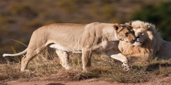 Inkwenkwezi Private Game Reserve Trails