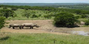 Mpongo Park Trails