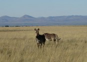 Mountain Zebra National Park Trails