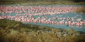 Flamingo Trail