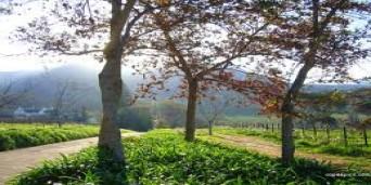 Constantia Valley Tourism