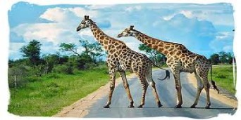 Kruger National Park Tourism
