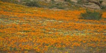 Springbok Tourism