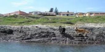 Sea View Tourism