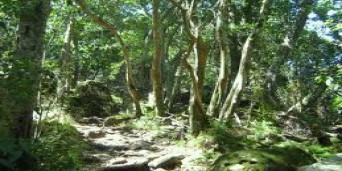 Newlands Tourism
