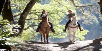 Hogsback Tourism