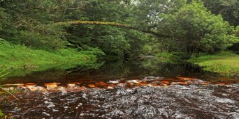 Jubilee Creek Picnic Site