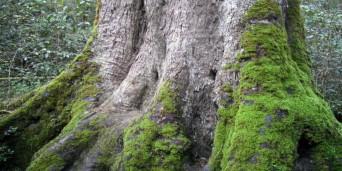 Velbroekdraai Picnic Site