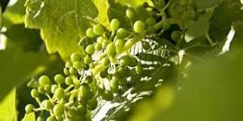 Badsberg Wine Estate