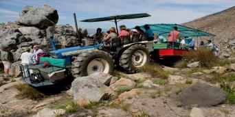 Protea Farm