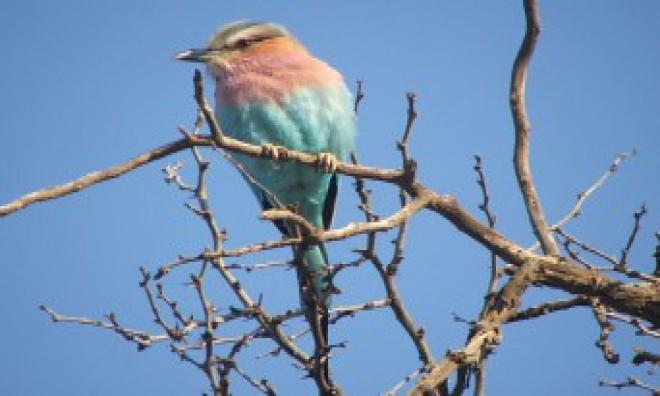 Kalahari Safaris