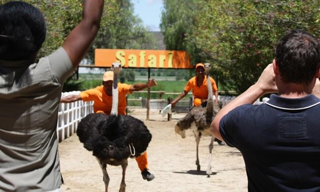 Safari Ostrich Show Farm
